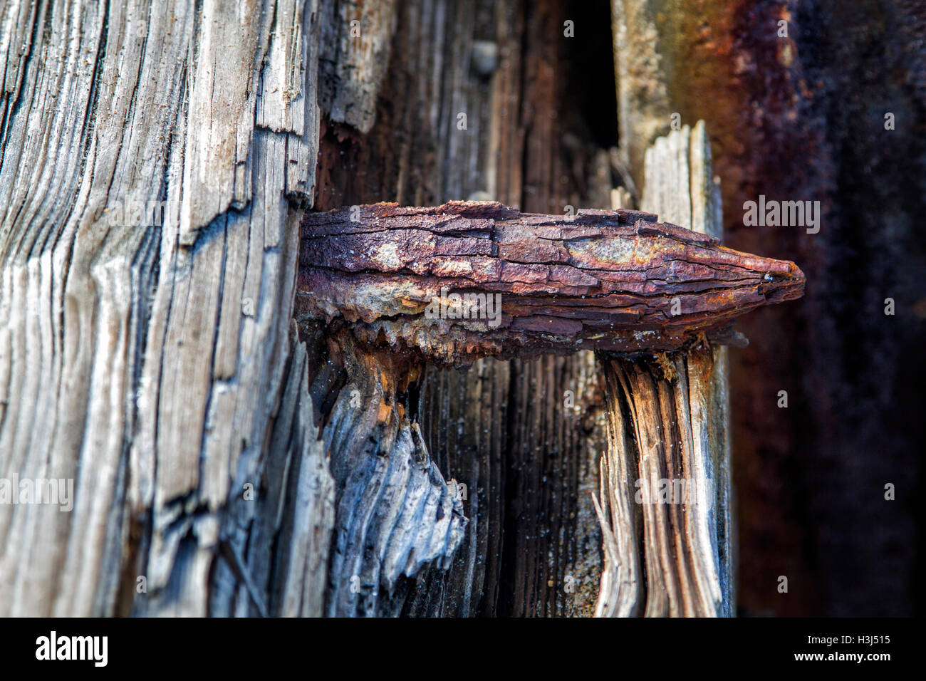 Wind, rain and suin have weathered the decking of the Hillsboro Inlet jetty as seen by this rusted steel bolt and - Stock Image