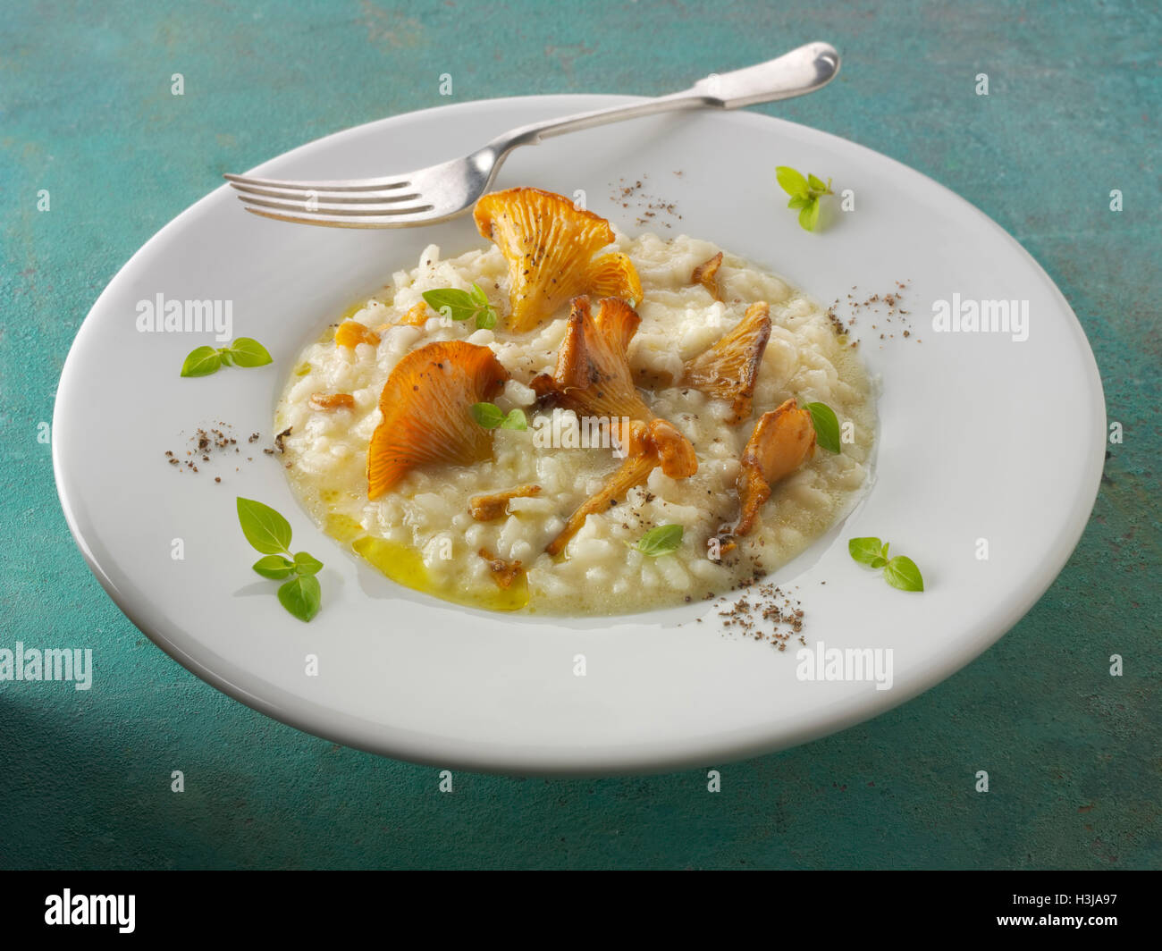 Wiild organic chanterelle or girolle Mushrooms (Cantharellus cibarius) or sauteed in butter and herbs risotto - Stock Image