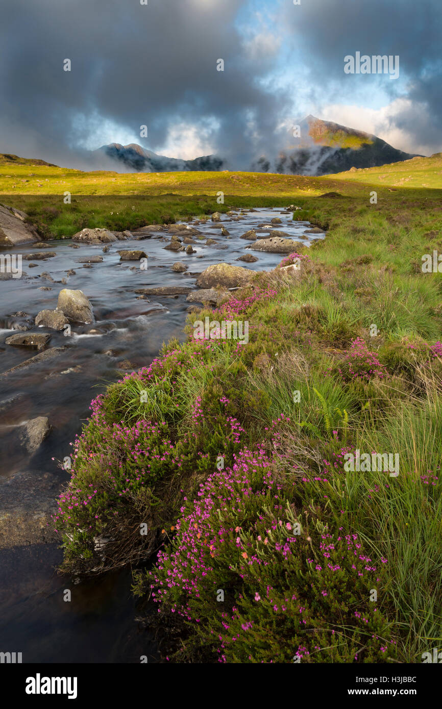 Nant Gwryd flows from Llyn Cwmffynnon leading into Dyffryn Mymbyr. Wild heather grows in the foreground. Stock Photo