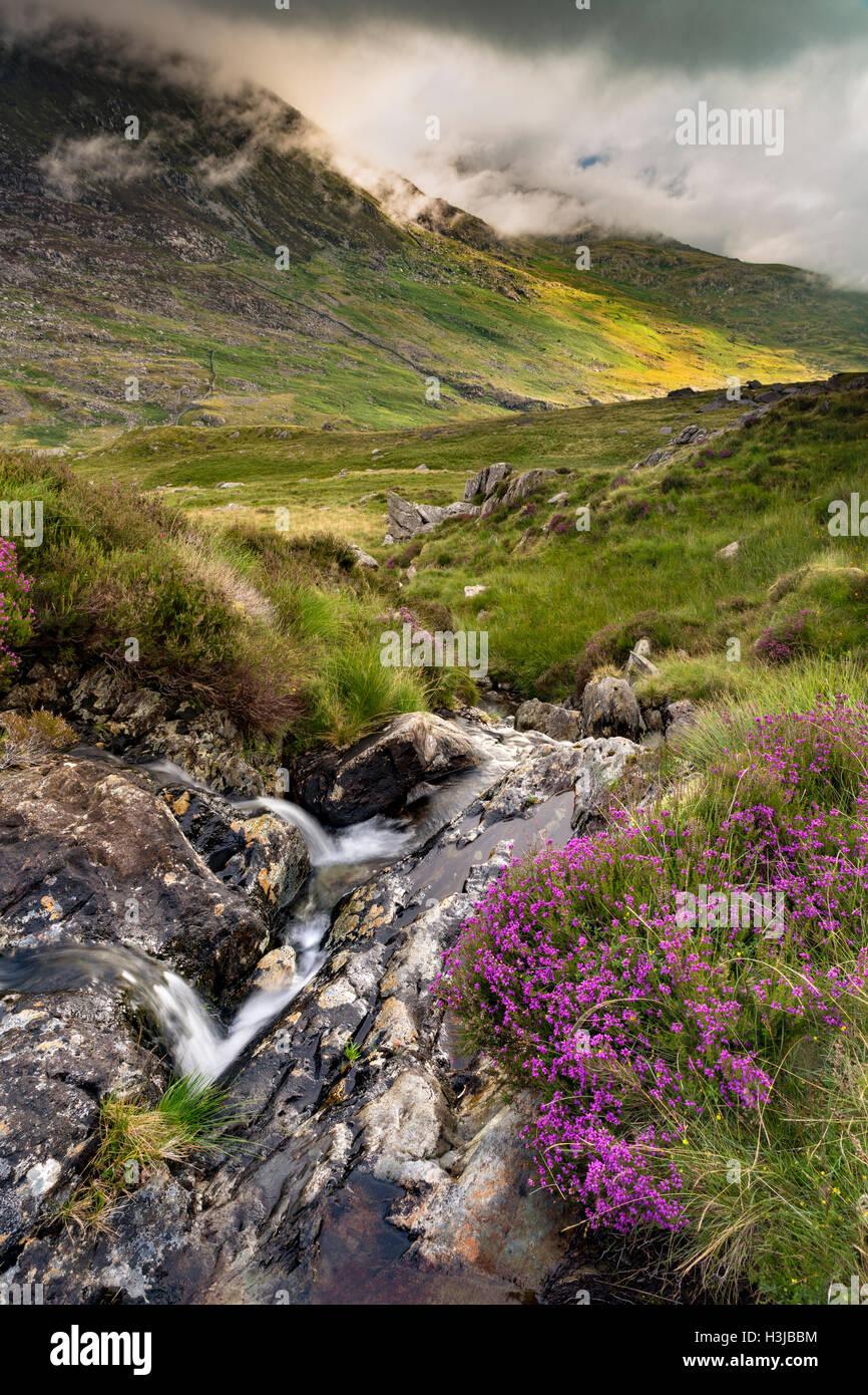 A stream off Nant Gwryd flows from Llyn Cwmffynnon leading into Dyffryn Mymbyr. Stock Photo