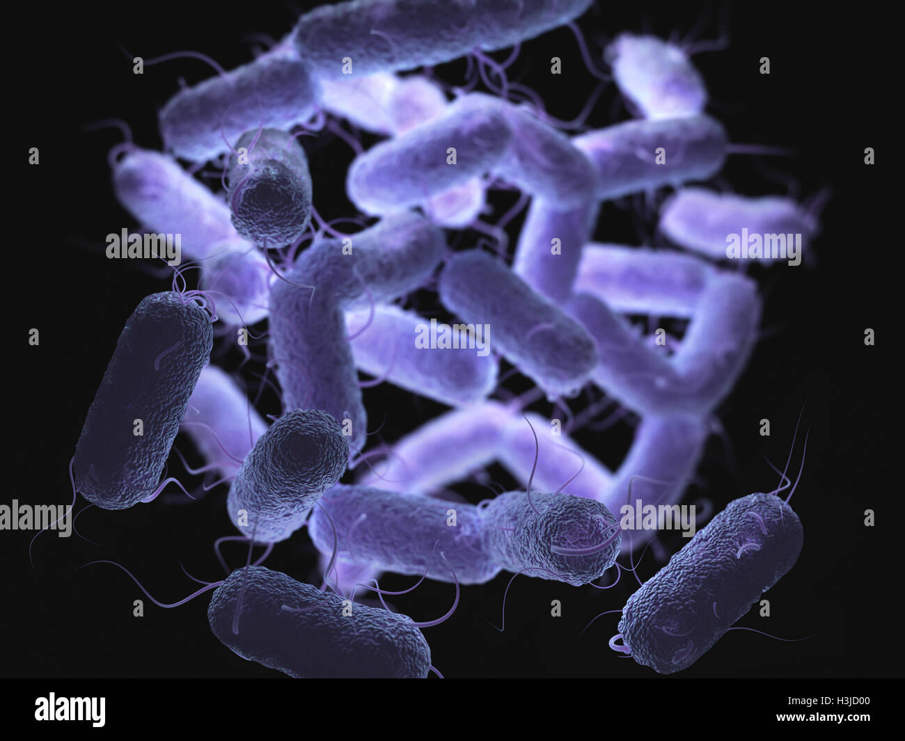 Enterobacteriaceae: large family of Gram-negative bacteria that includes many of the more familiar pathogens. - Stock Image