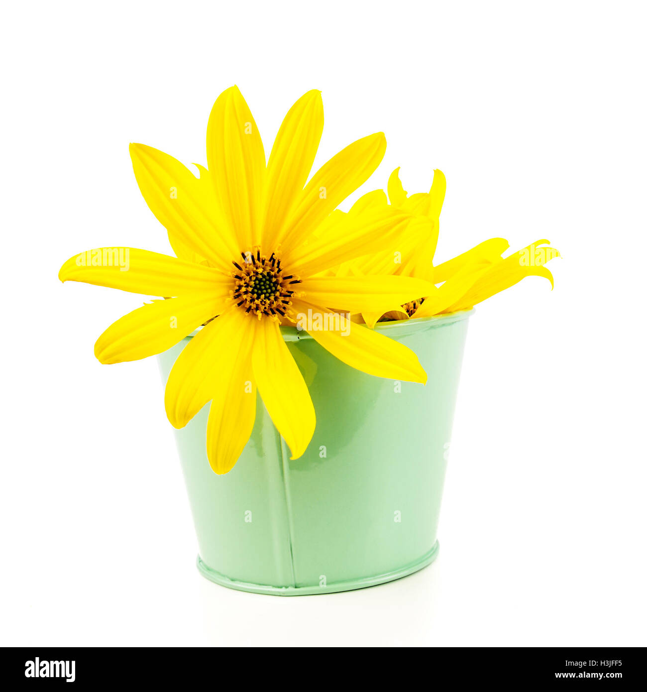 Yellow flowers in green pot with thin petals on light white stock yellow flowers in green pot with thin petals on light white background mightylinksfo