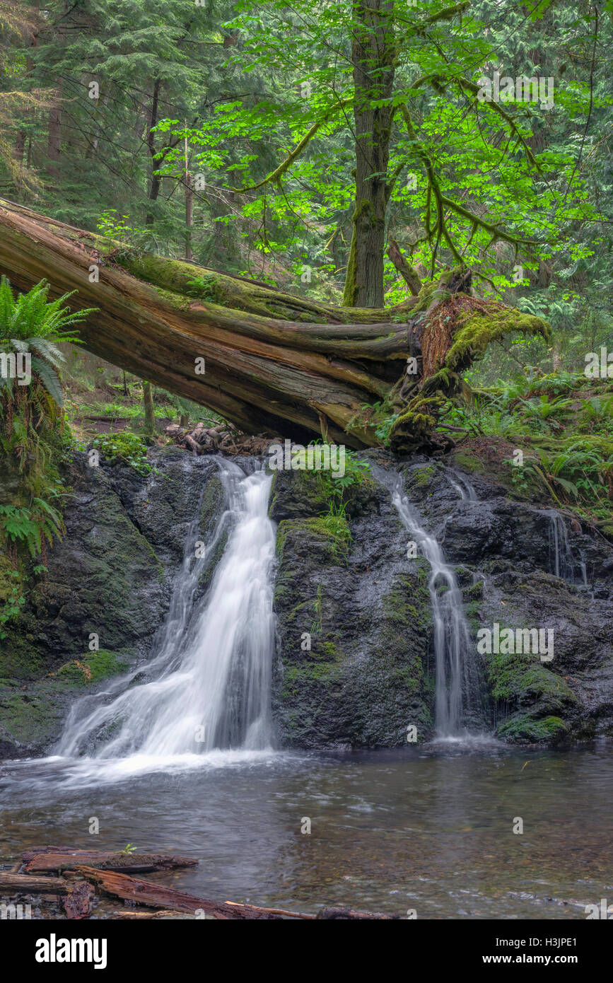 Language In 45 And 47 Stella Street: Cascade Falls Moran State Orcas Park Island Stock Photos
