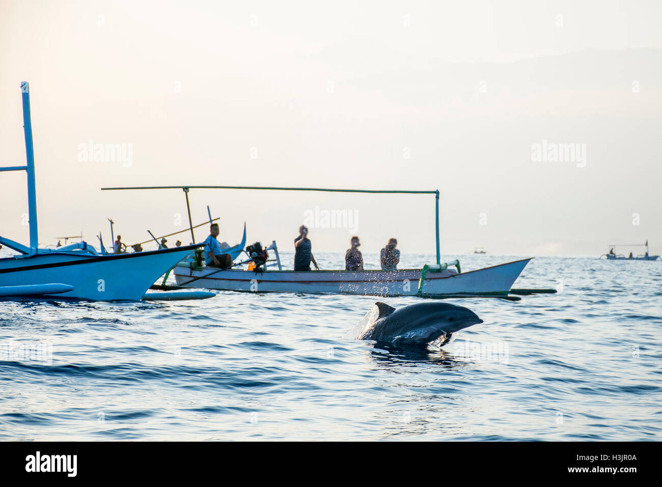 Bali Indonesia free Dolphin boat Watching at Lovina Beach - Stock Image