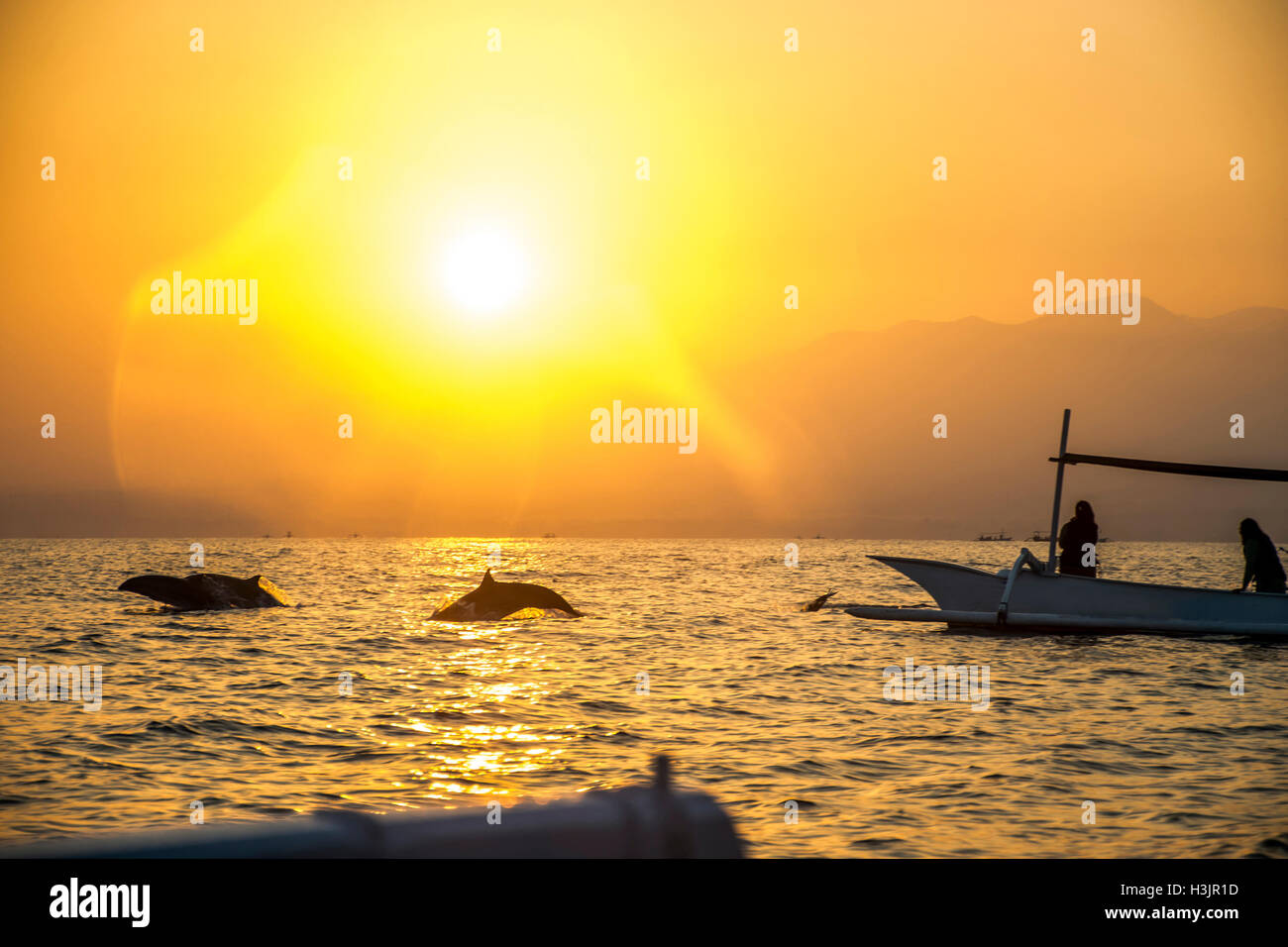 Bali Indonesia free Dolphin boat Watching at Lovina Beach 3 - Stock Image