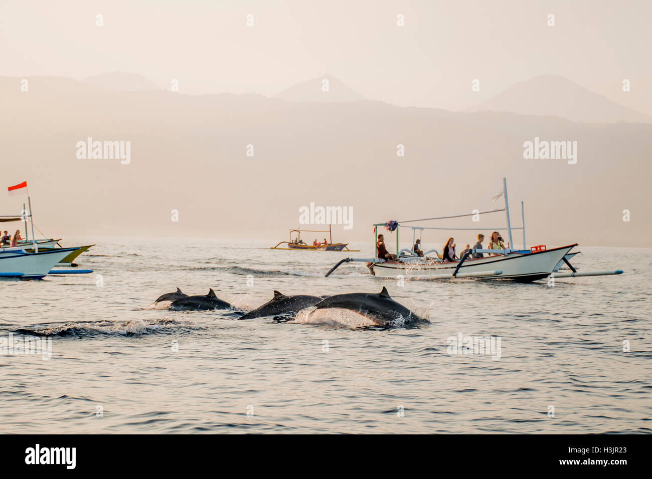 Bali Indonesia free Dolphin boat Watching at Lovina Beach 7 - Stock Image