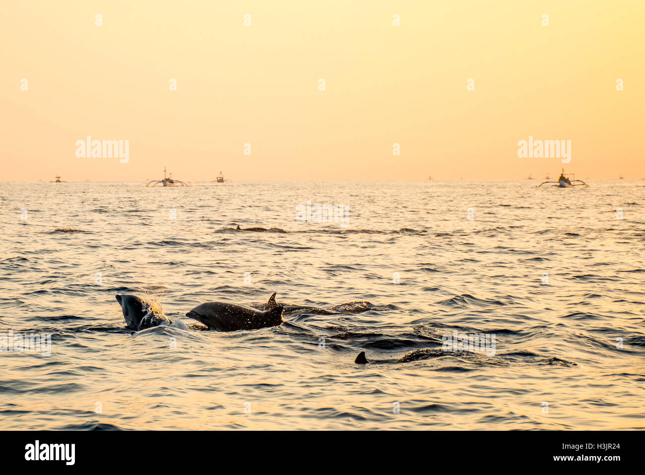 Bali Indonesia free Dolphin boat Watching at Lovina Beach 6 - Stock Image