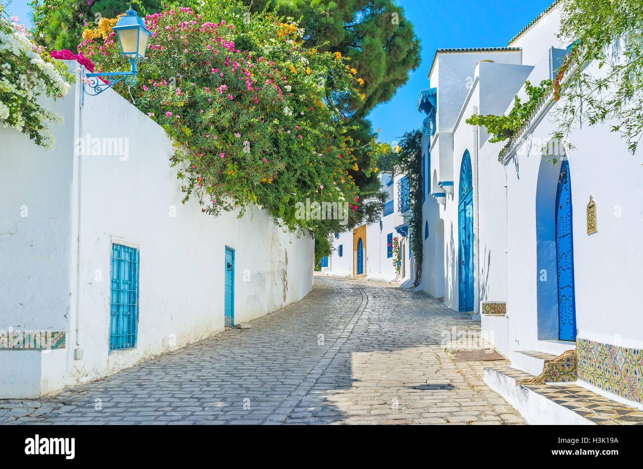 The village of Sidi Bou Said boasts the lush greenery in private gardens behind the high fences, Tunisia. - Stock Image