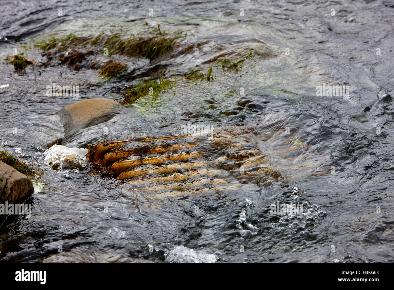 rusting metal radiator discarded in stream Iceland - Stock Image