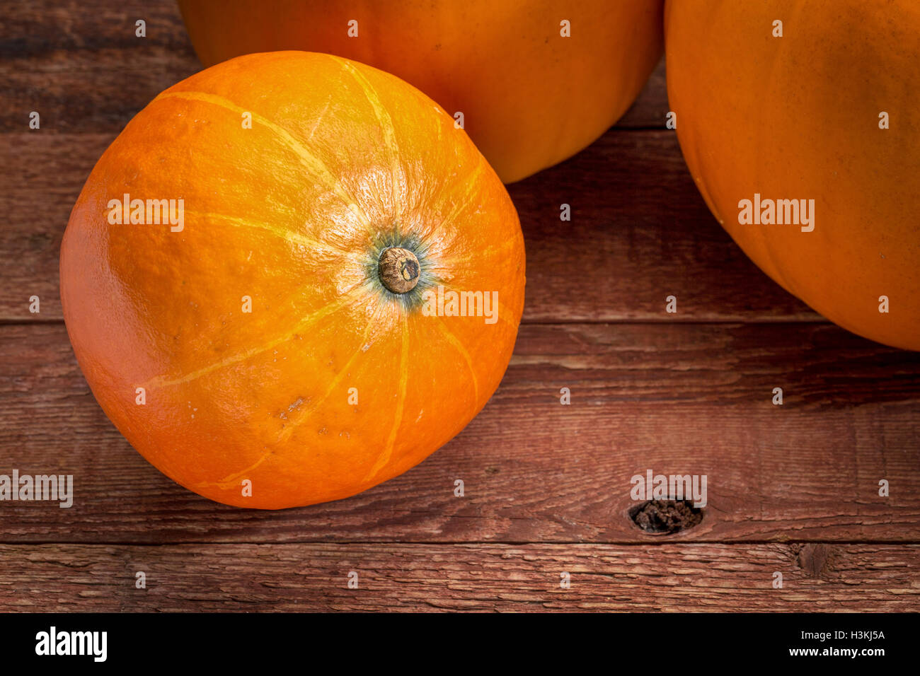 red kuri winter squash and pumpkins against rustic barn wood Stock Photo