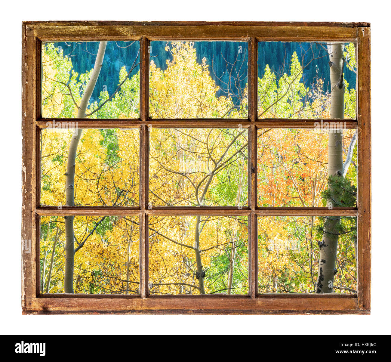 Aspen Tree Cut Out Stock Images & Pictures - Alamy