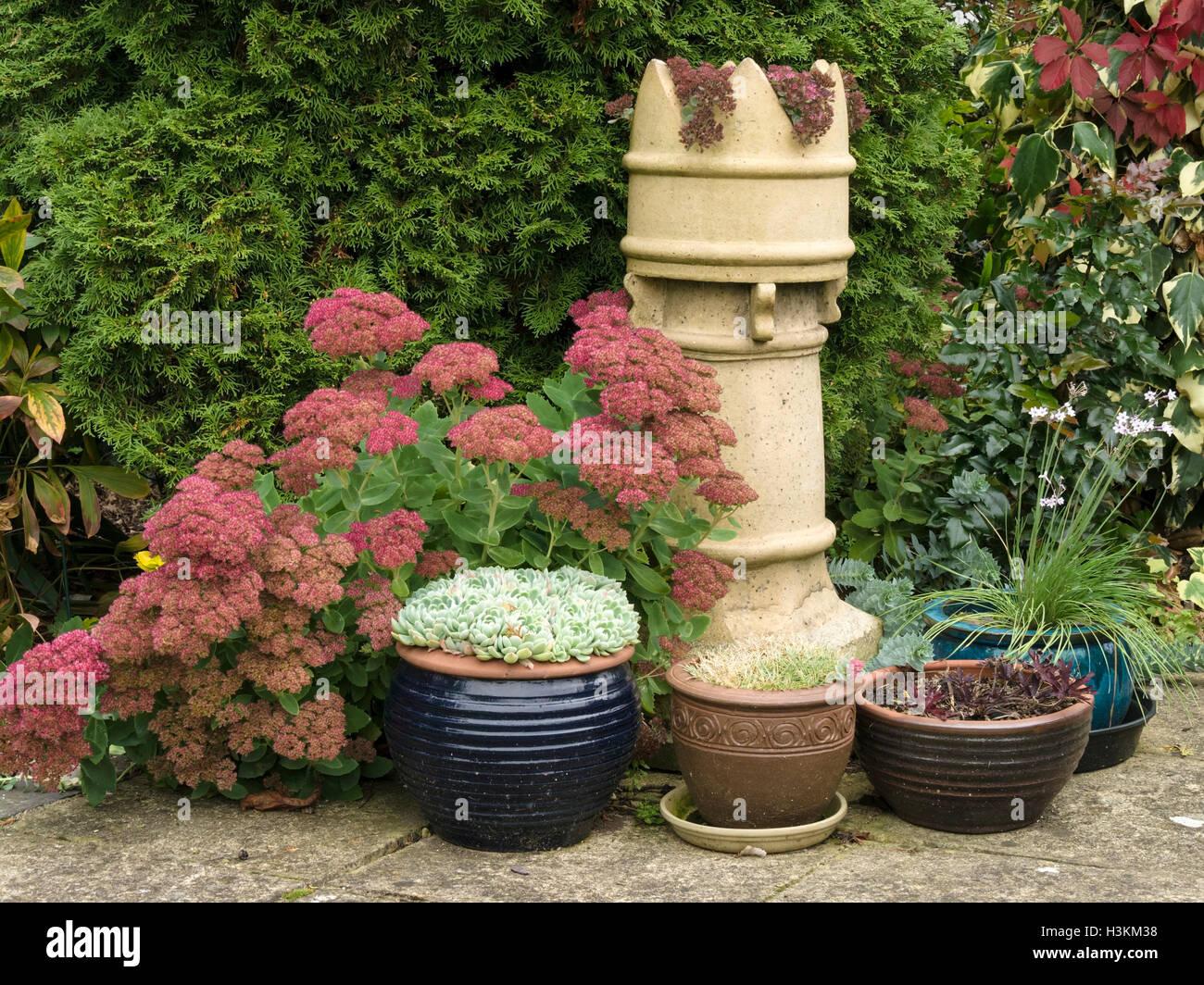 Sedum, Houseleek, Patio Pots And Victorian Chimney Pot Garden Arrangement,  UK