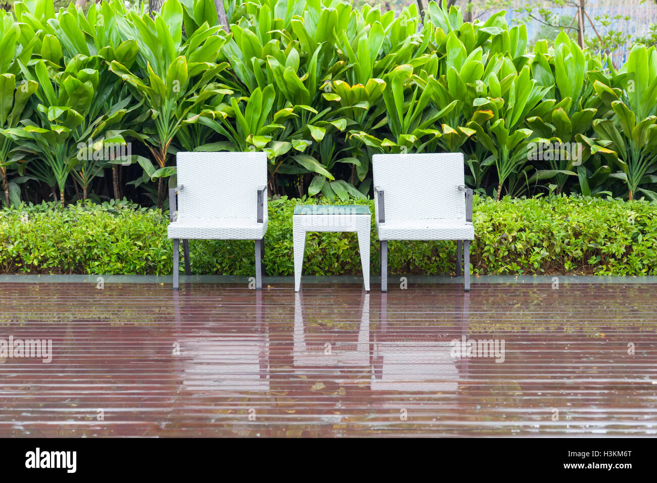 Green garden with an outdoor furniture group with rattan chairs and table in a patio, canna and shrub, Stock Photo