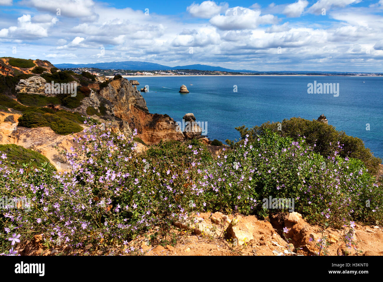 Coastline Algarve with flowers in the spring. Portugal, near Lagos Stock Photo