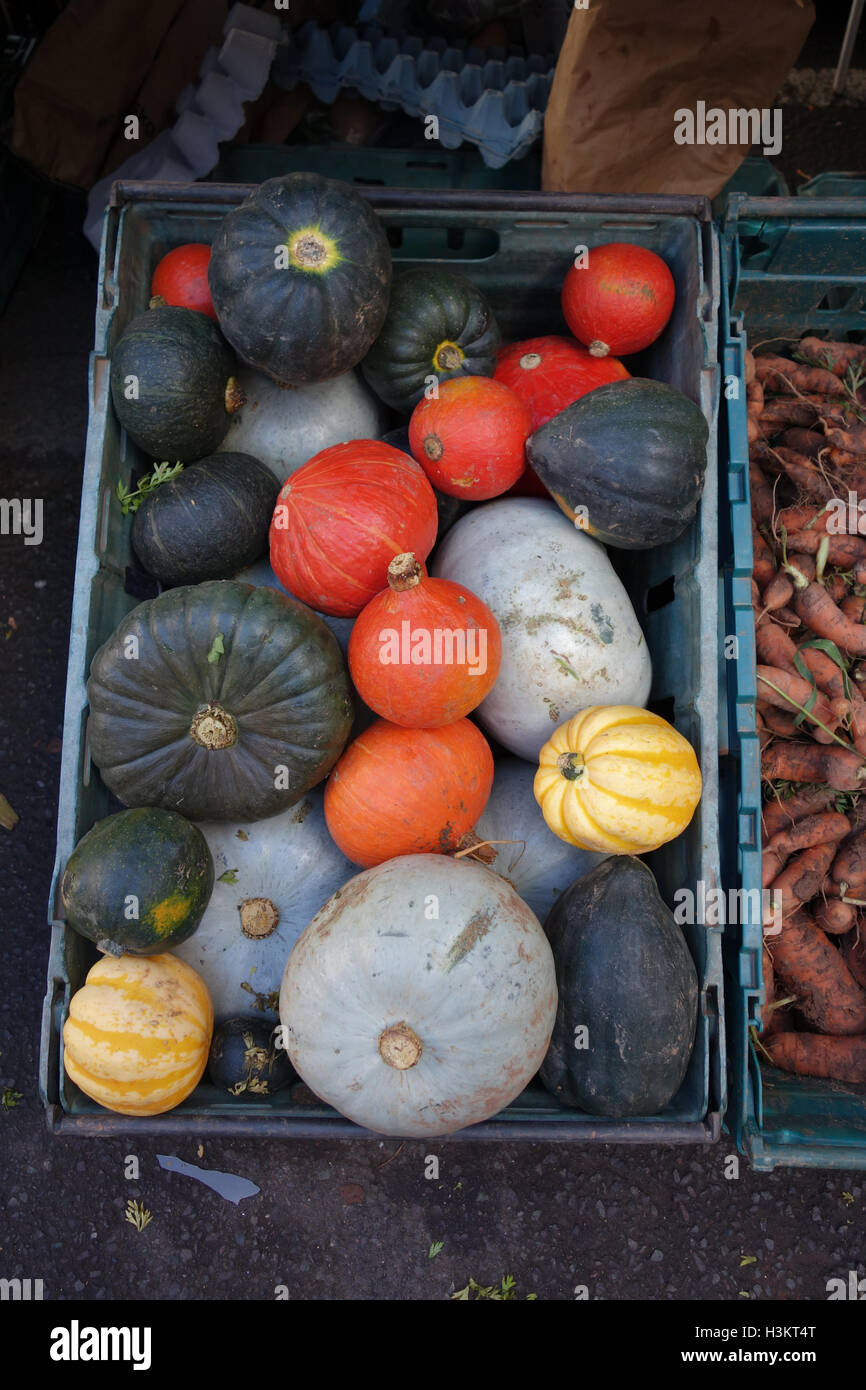 Box of gourds and squashes on sale.at a greengrocers - Stock Image