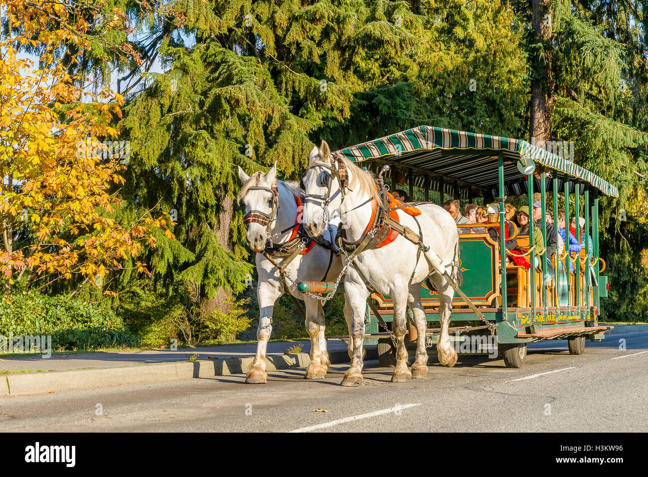 Horse drawn sightseeing tour, Stanley Park, Vancouver, British Columbia, Canada. - Stock Image