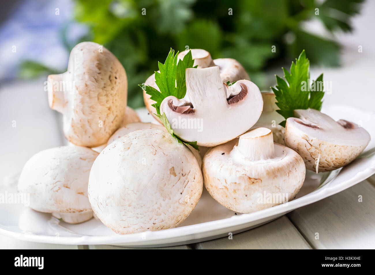 Mushroom. Champions mushrooms in different positions with herb decoration. - Stock Image