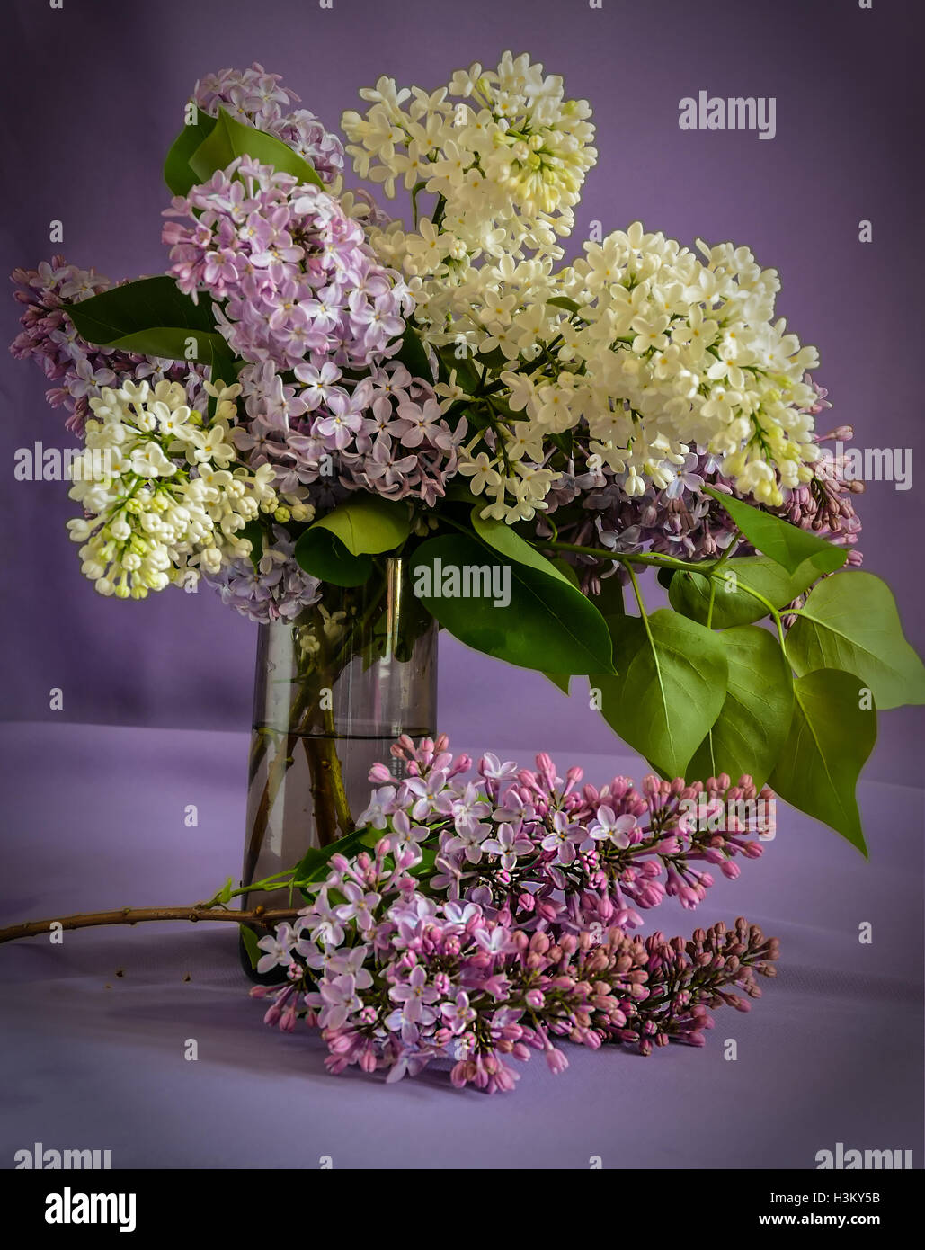 Spring bouquet of lilacs in a vase. - Stock Image