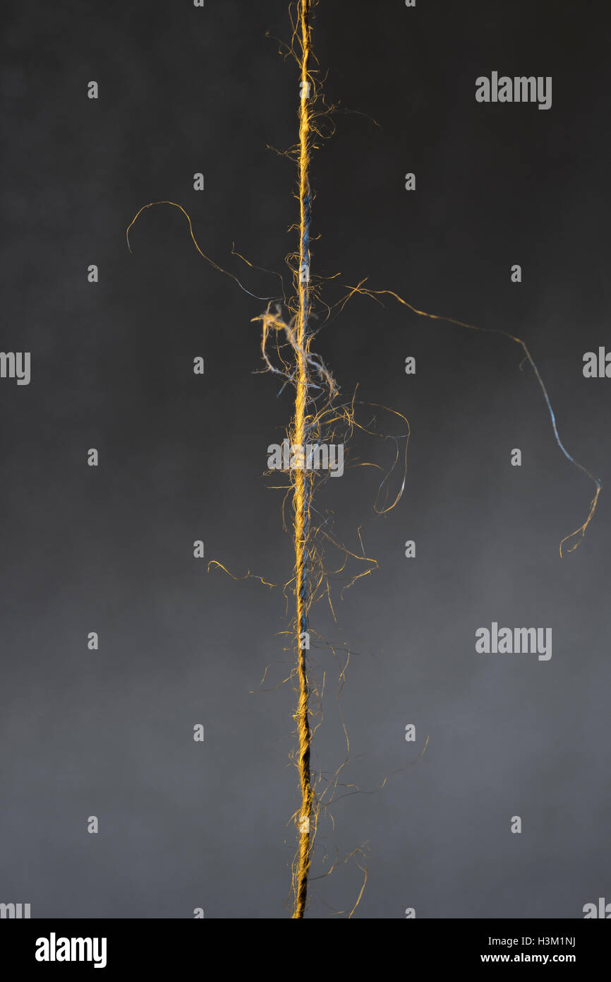 Piece of frayed natural fiber string against a dark background - visual metaphor for 'hanging by a thread'. - Stock Image