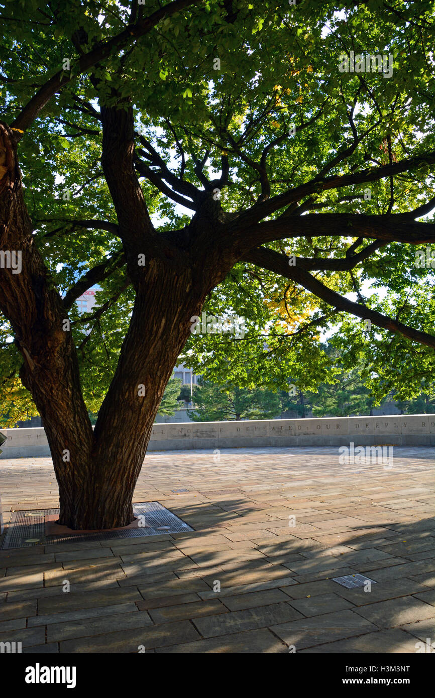 The Survivor Tree, a 100-year-old Elm tree that survived the Murrah Federal Building bombing on April 19, 1995. - Stock Image