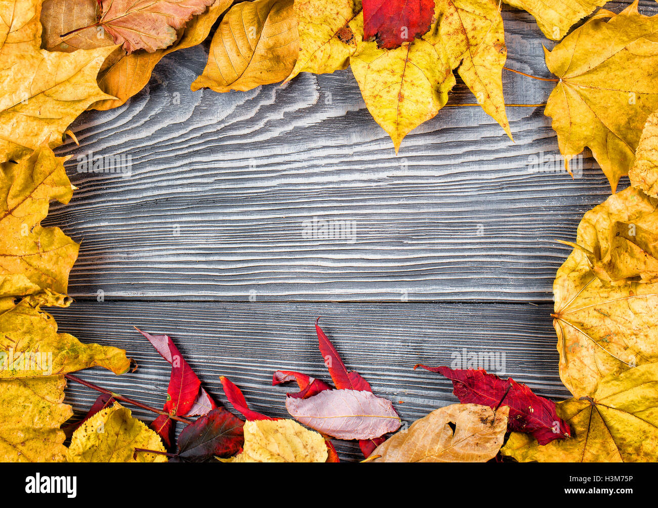 Wooden background with frame of autumn leaves on it - Stock Image