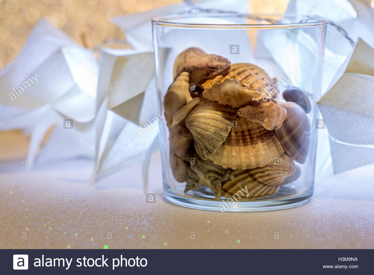 Sea shells on lighted background, these sea shells are very common on Spanish beaches, and can be found on many - Stock Image