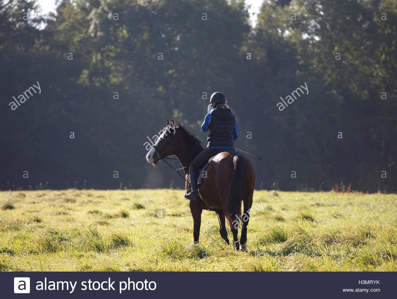 Young woman riding her horse in an open field UK - Stock Image