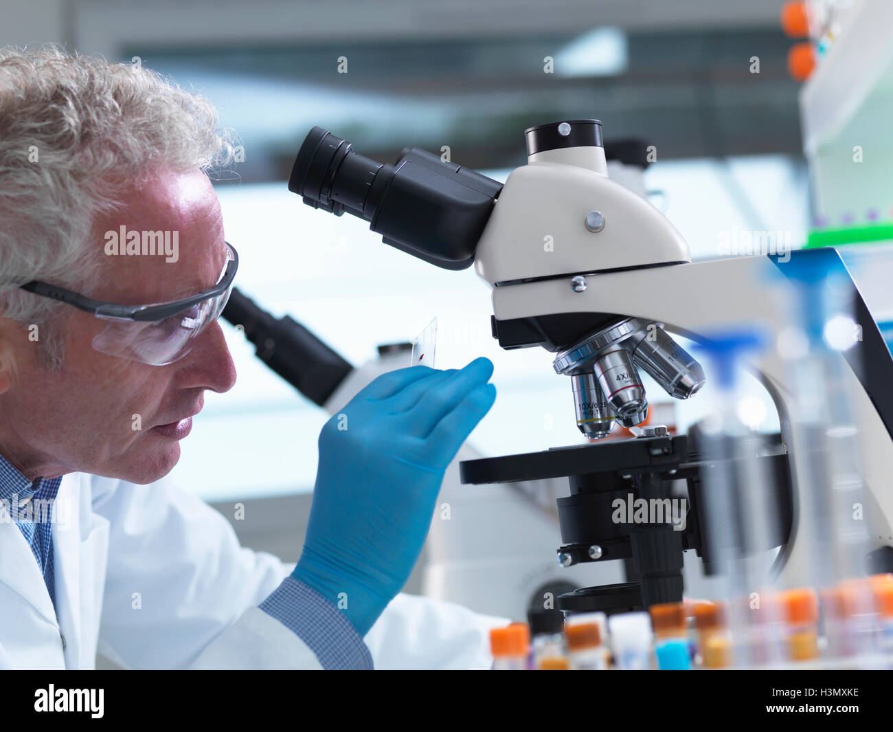 Scientist preparing a sample slide containing a human specimen to view under a microscope in laboratory for medical - Stock Image