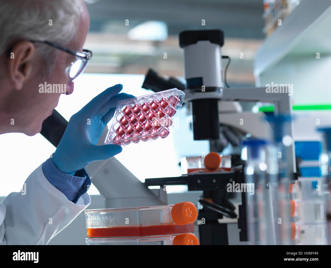 Scientist holding a multiwell plate containing growth medium commonly used in biological research to maintain and - Stock Image