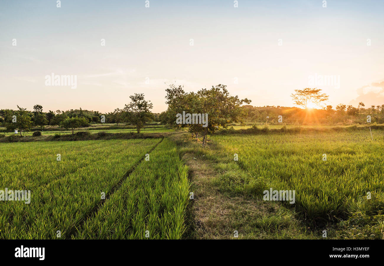 Green field landscape at sunset, Lombok, Indonesia - Stock Image