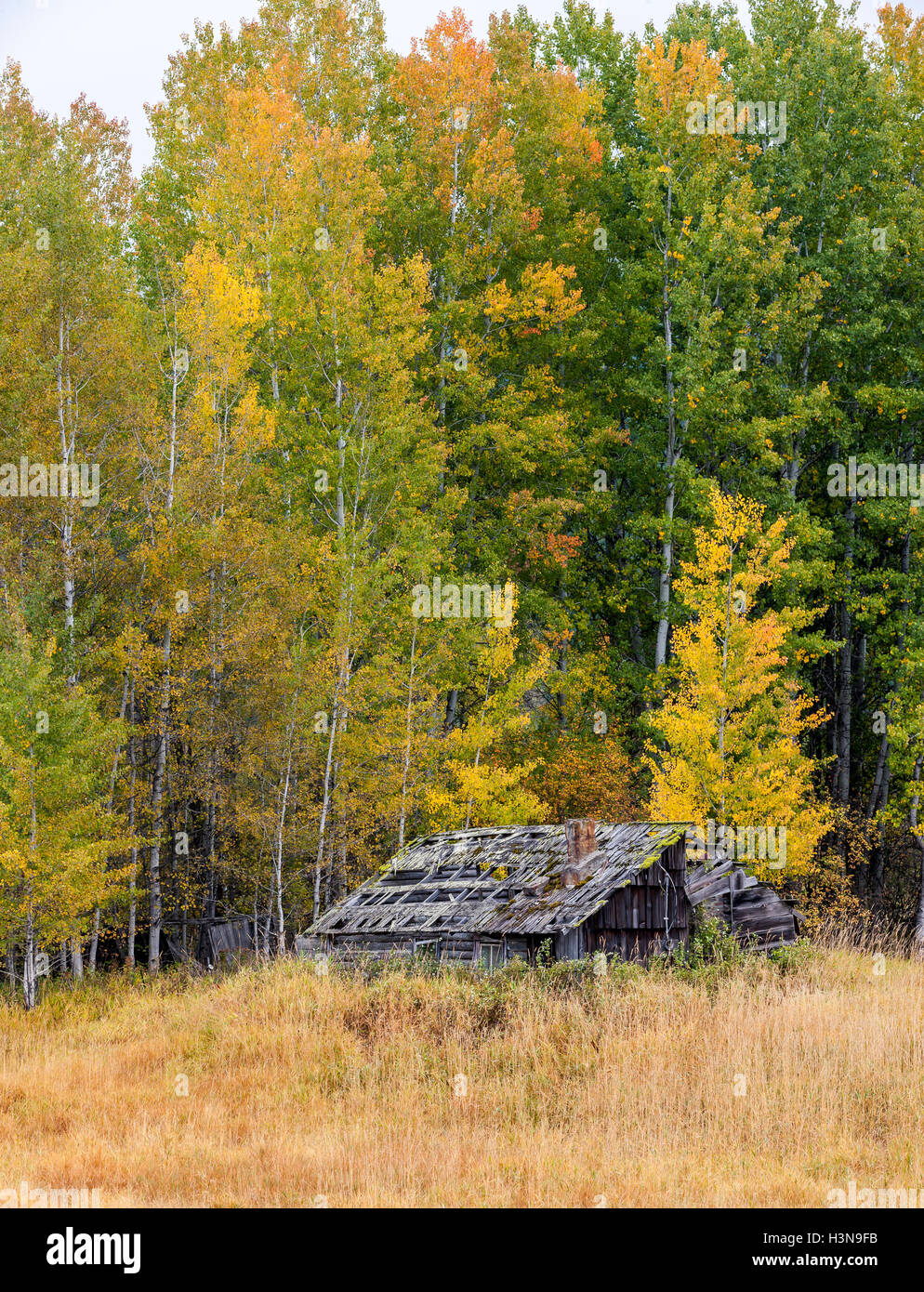 Old decrepit shed in autumn. - Stock Image