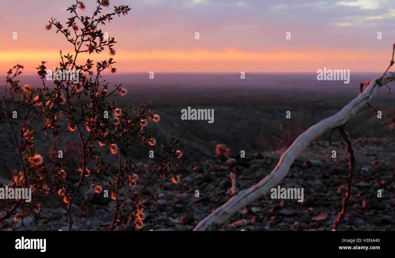 Barely sunlit creosote flowers during sunrise overlooking the vast badlands of Anza-Borrego Desert - Stock Image