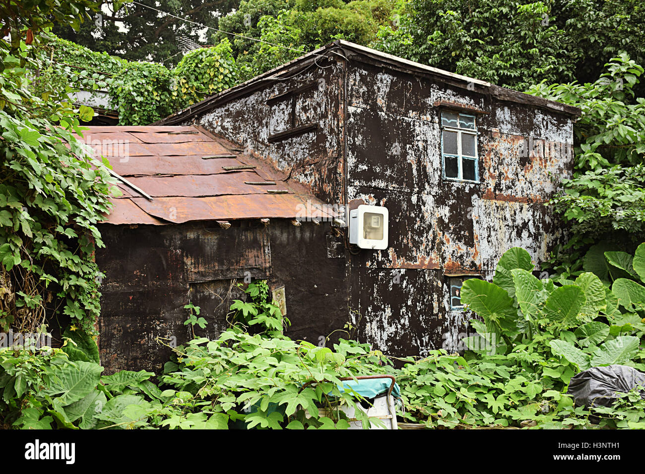 Old abandoned house in the woods in Tai O fishing village, Lantau island, Hong Kong S.A.R. - Stock Image