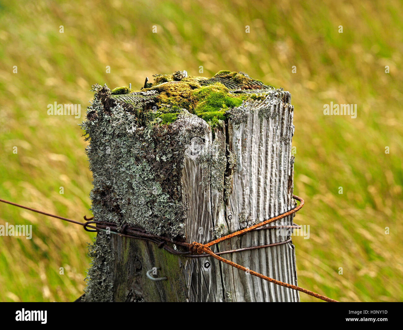 rusty fence wires & aged square wooden post with lichen & moss growth on top in grassy upland above Swindale Cumbria Stock Photo