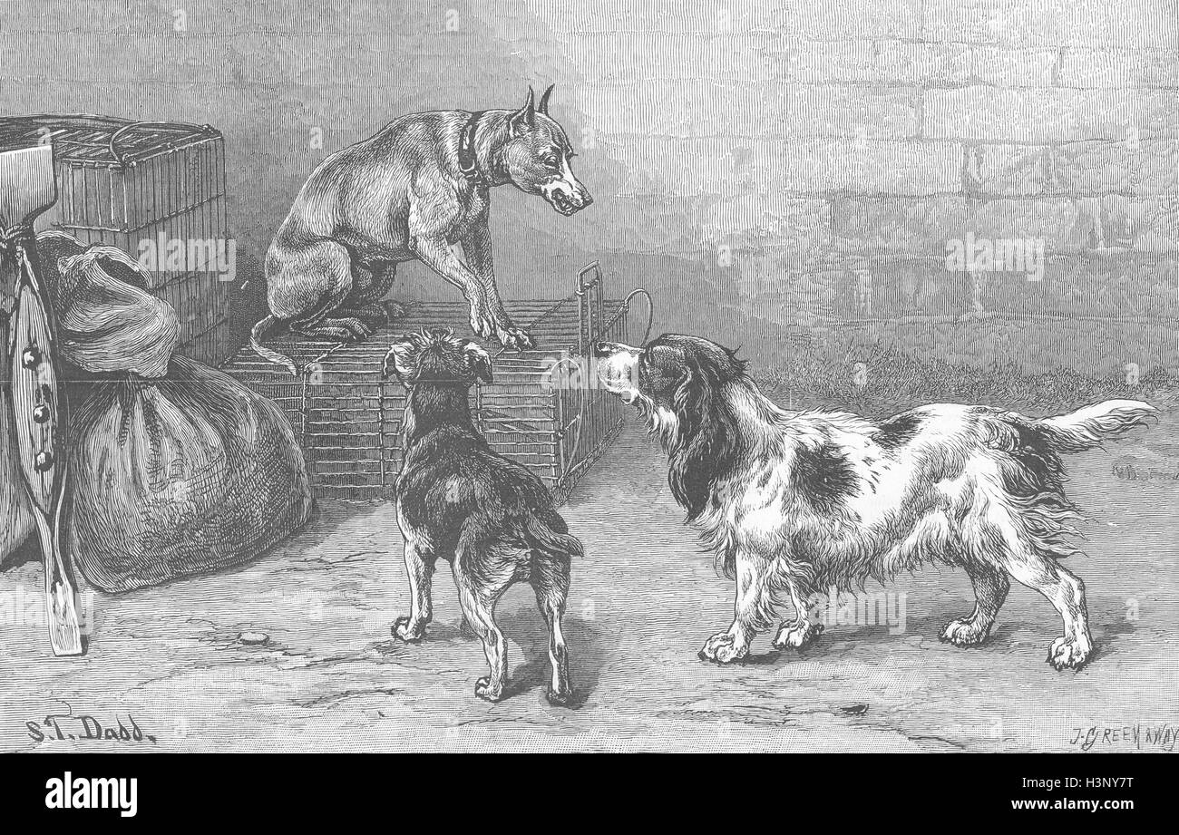 DOGS The man in possession 1884. Illustrated London News - Stock Image