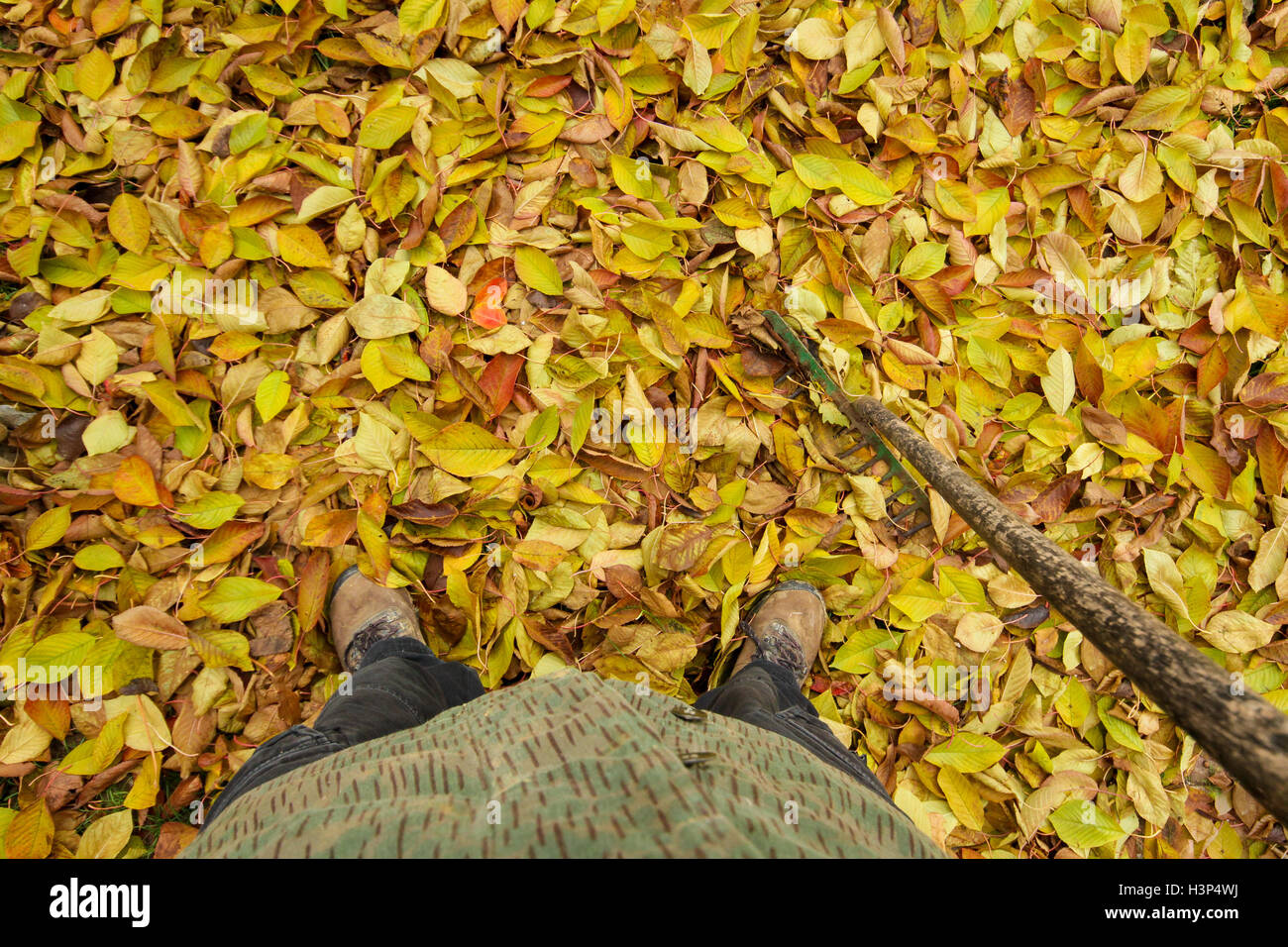 Looking down at forest floor covered in leaves - Stock Image