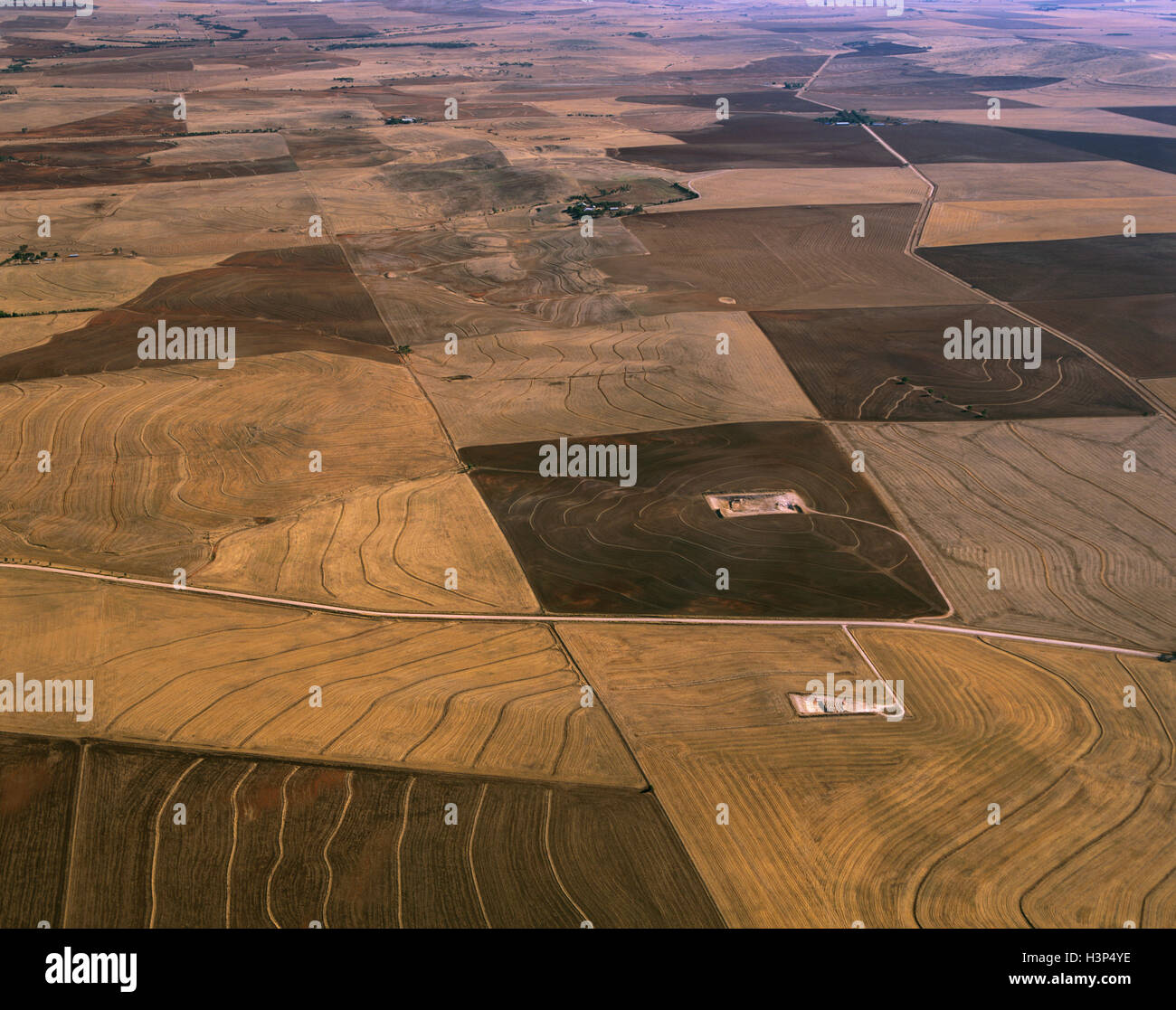 Wheatfields and other grain fields near Crystal Brook, - Stock Image
