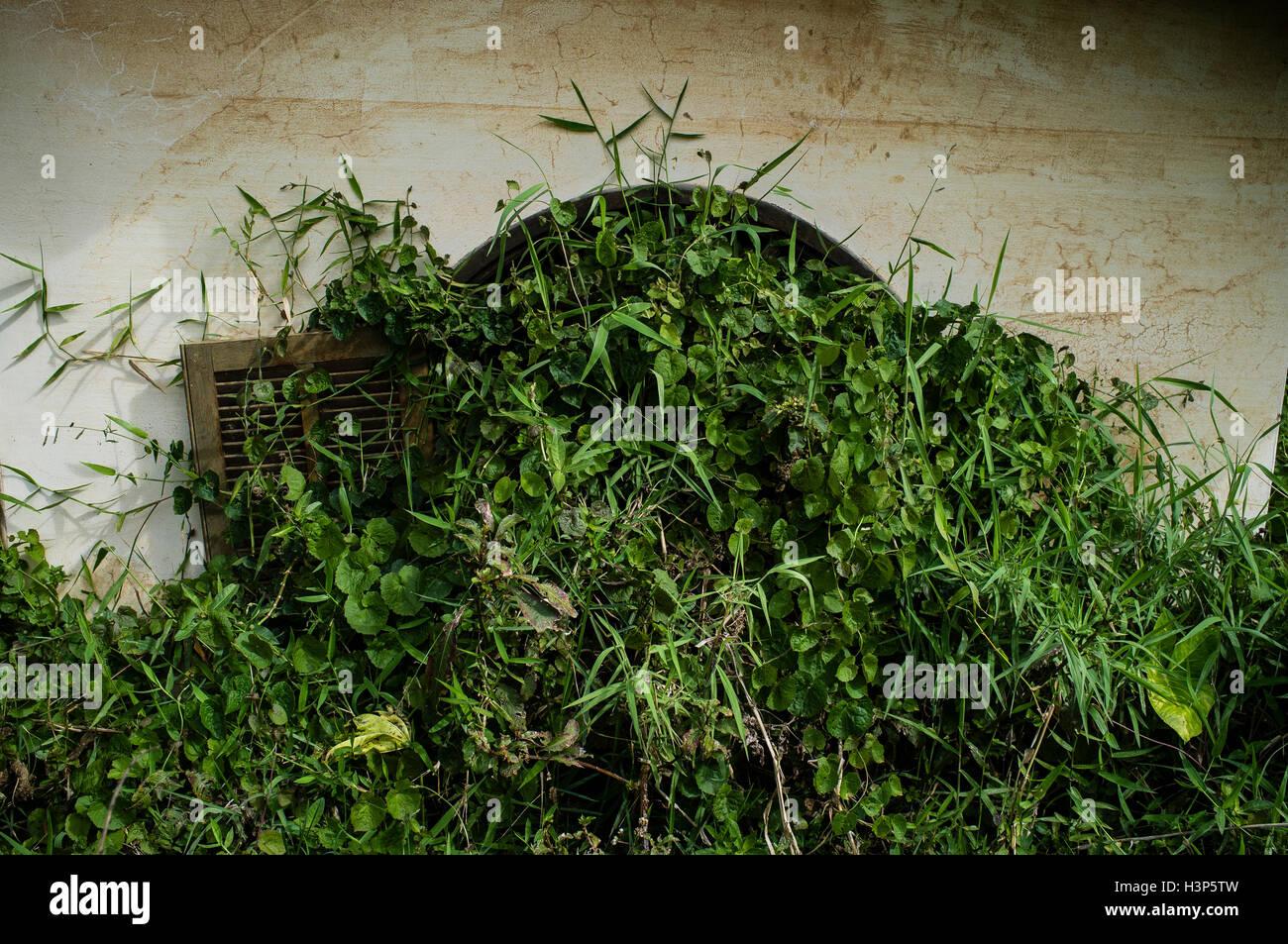 Abandoned house after natural disaster, Nova Friburgo, Rio de Janeiro State, Brazil. - Stock Image