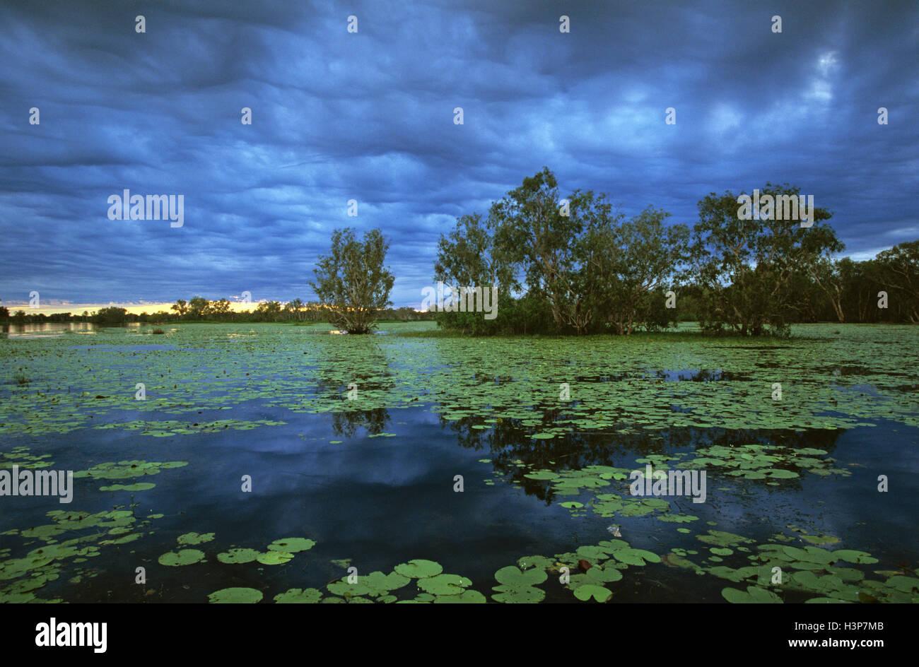 Yellow Water paperbark swamp (Melaleuca spp.) - Stock Image