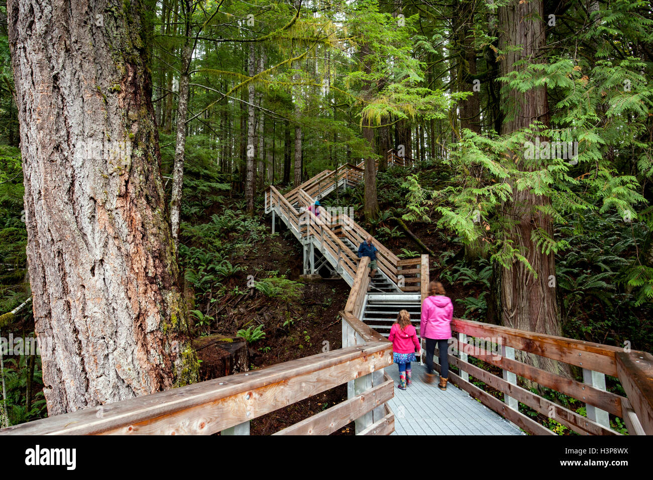 Trail to Elk Falls - Elk Falls Provincial Park and Protected Area - Campbell River, Vancouver Island, British Columbia, - Stock Image