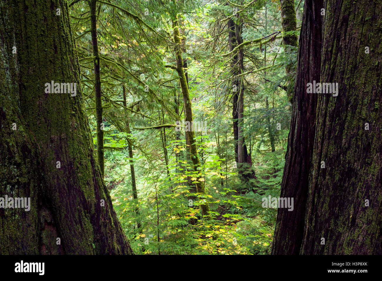Elk Falls Provincial Park and Protected Area - Campbell River, Vancouver Island, British Columbia, Canada - Stock Image