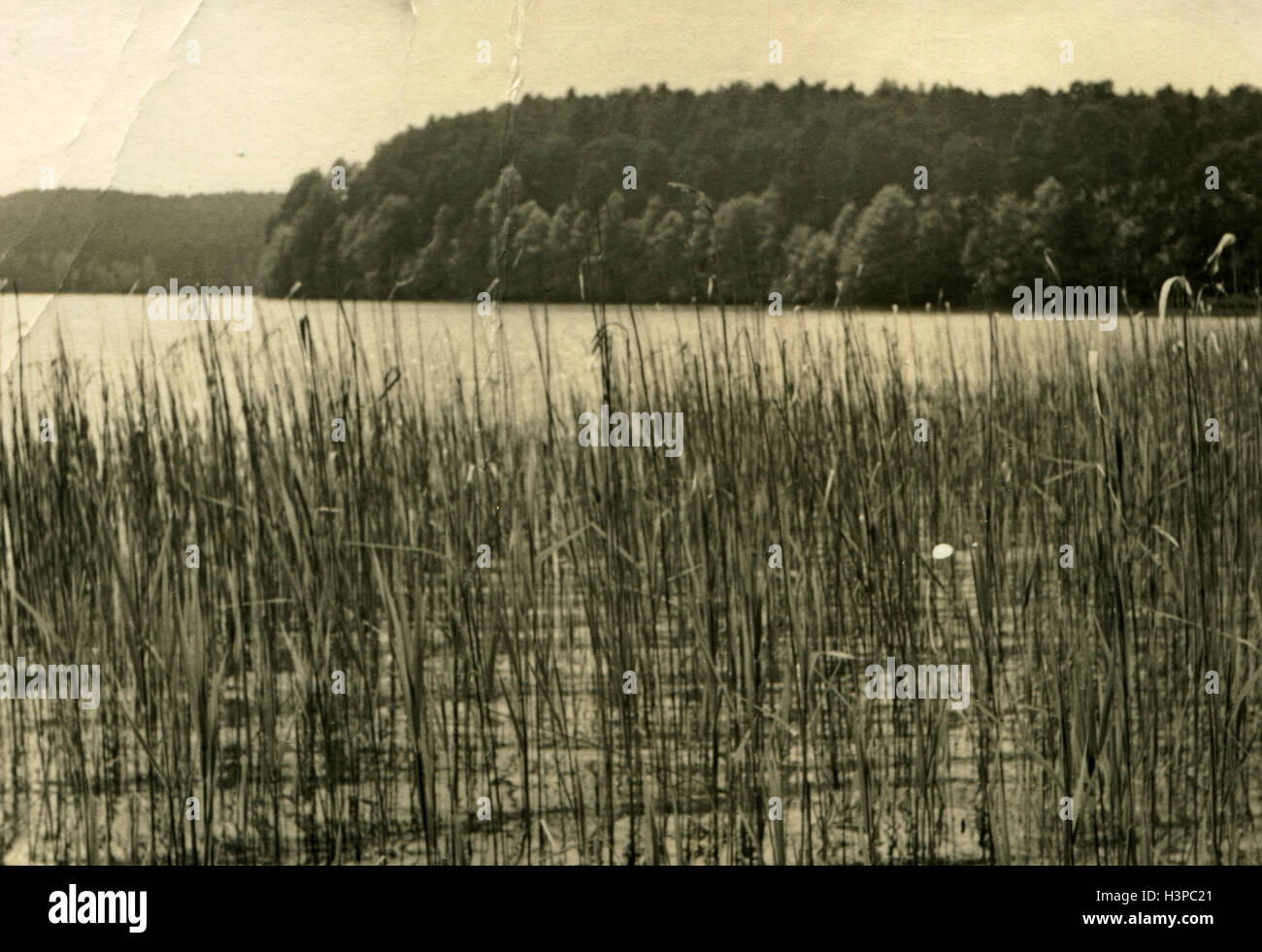 GERMANY - CIRCA 1960s:view of the lake, the shores of which are overgrown with reeds Stock Photo