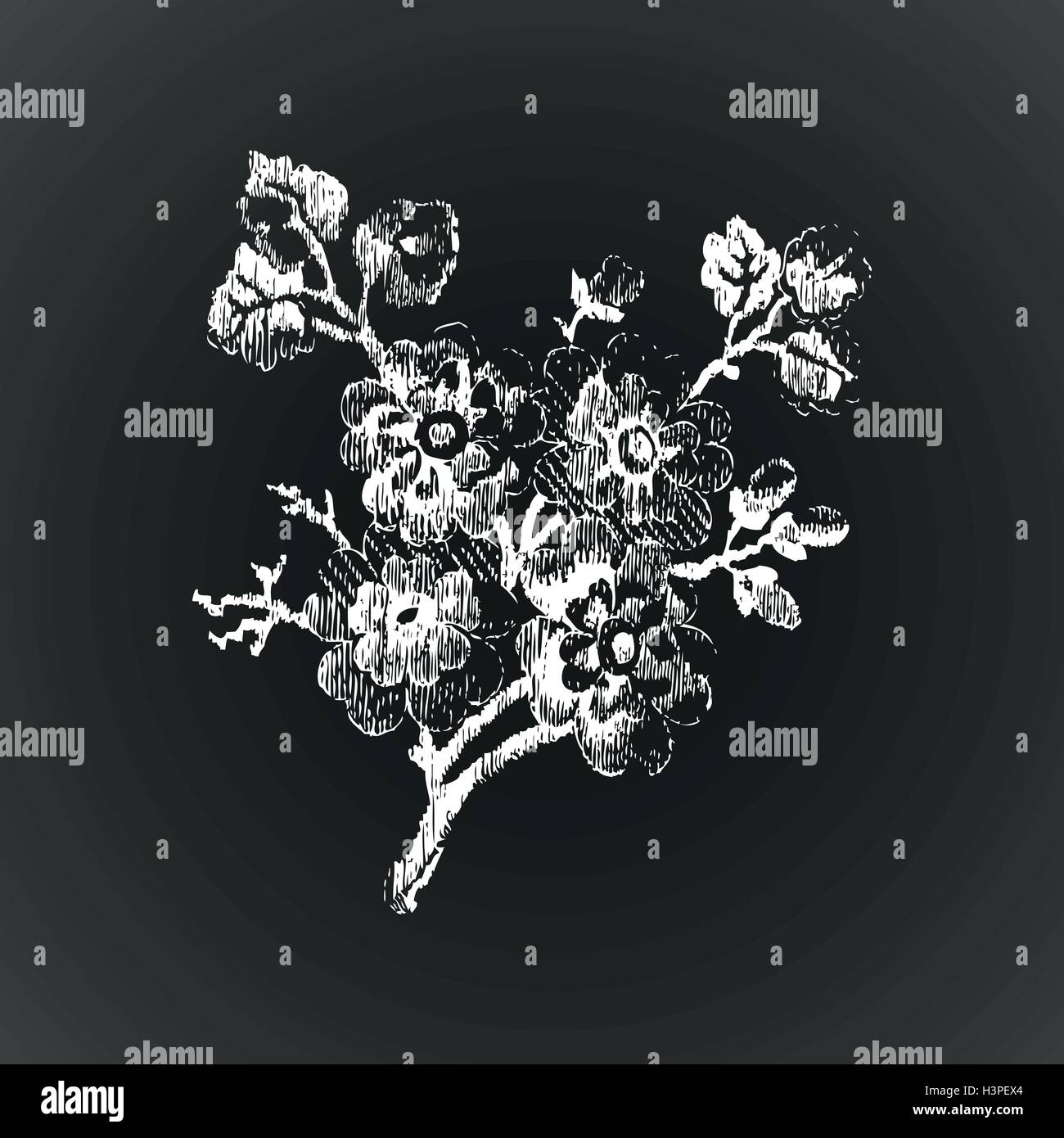 Hand drawn twig with flowers, vintage isolated on black background vector illustration realistic sketch - Stock Vector
