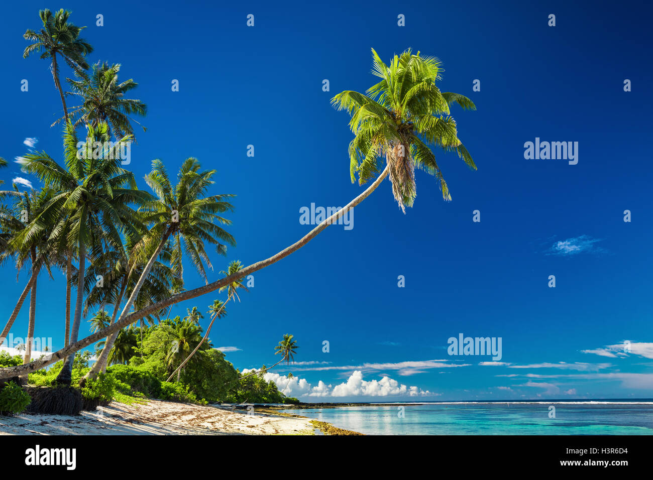 Tropical beach on south side of Samoa Island with coconut palm trees - Stock Image
