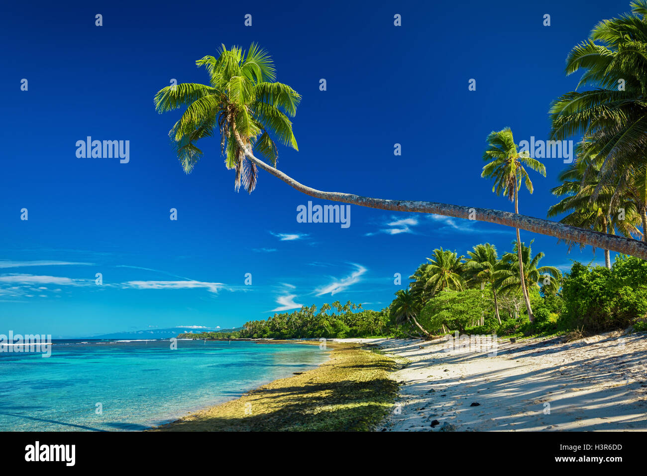 Tropical beach on south side of Samoa Island with many palm trees - Stock Image