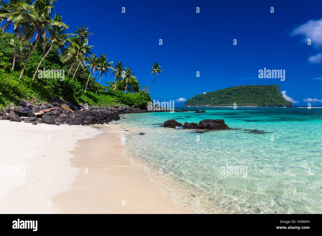 Vibrant tropical Lalomanu beach on Samoa Island with coconut palm trees - Stock Image