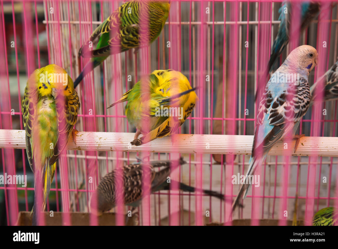 Birds in a cage - Stock Image