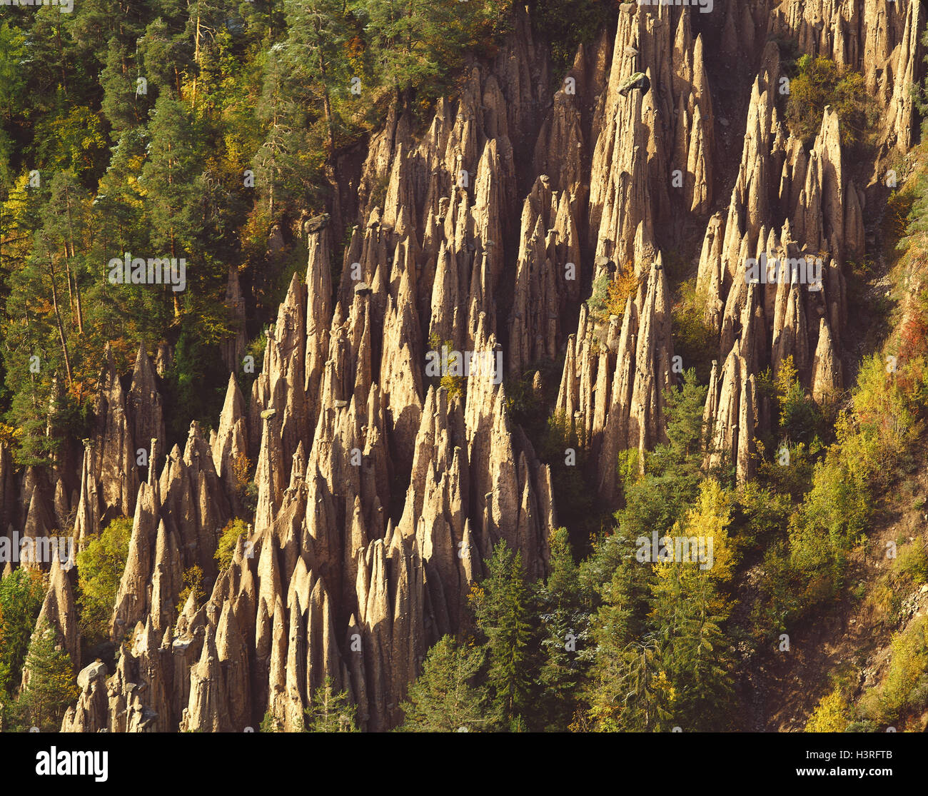 Italy, South Tyrol, earth pyramids in the ride, earth pyramids, wood, nature, erosion, geology, nature forms, stones, - Stock Image