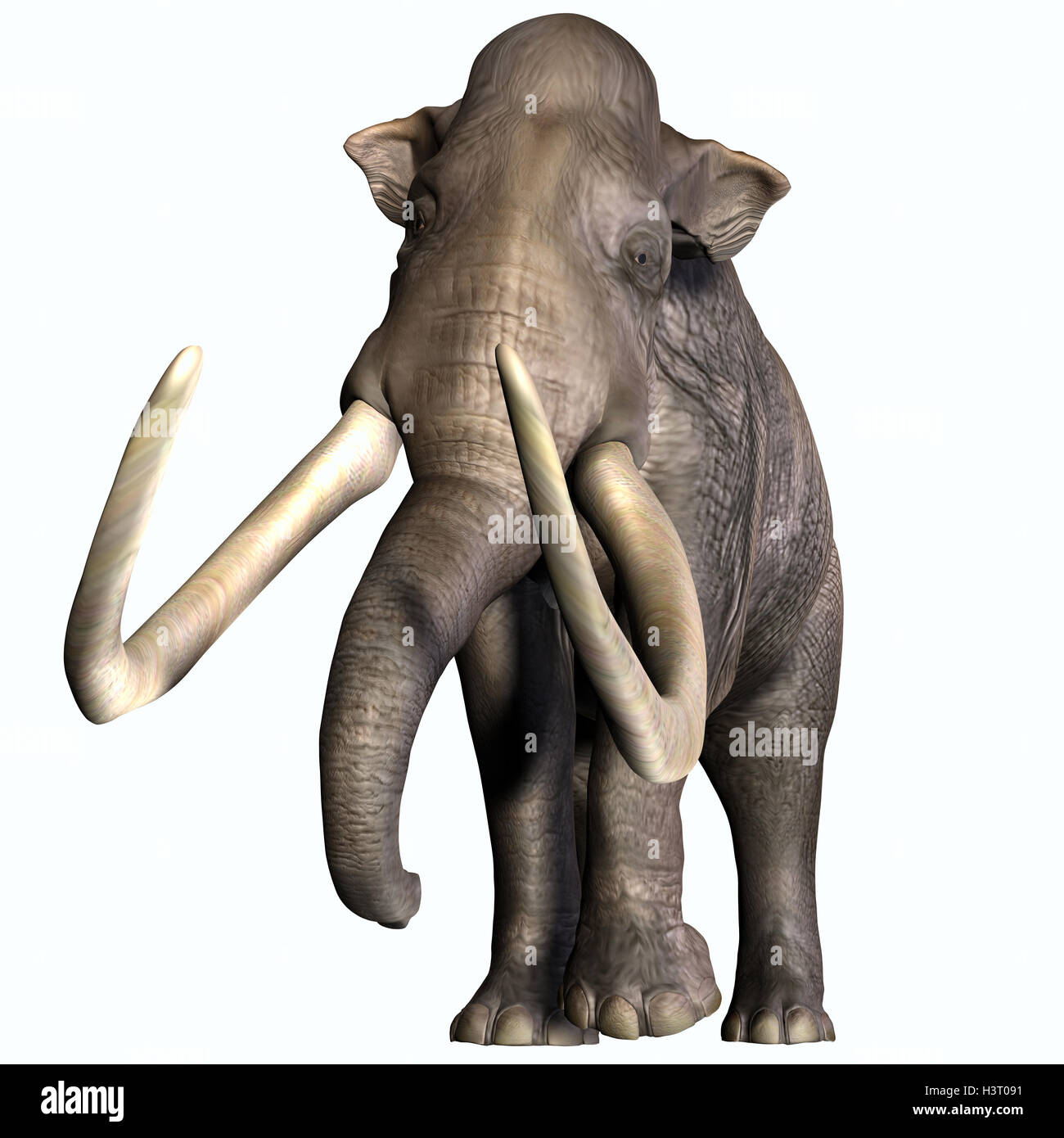 Columbian Mammoth Front Profile - Stock Image