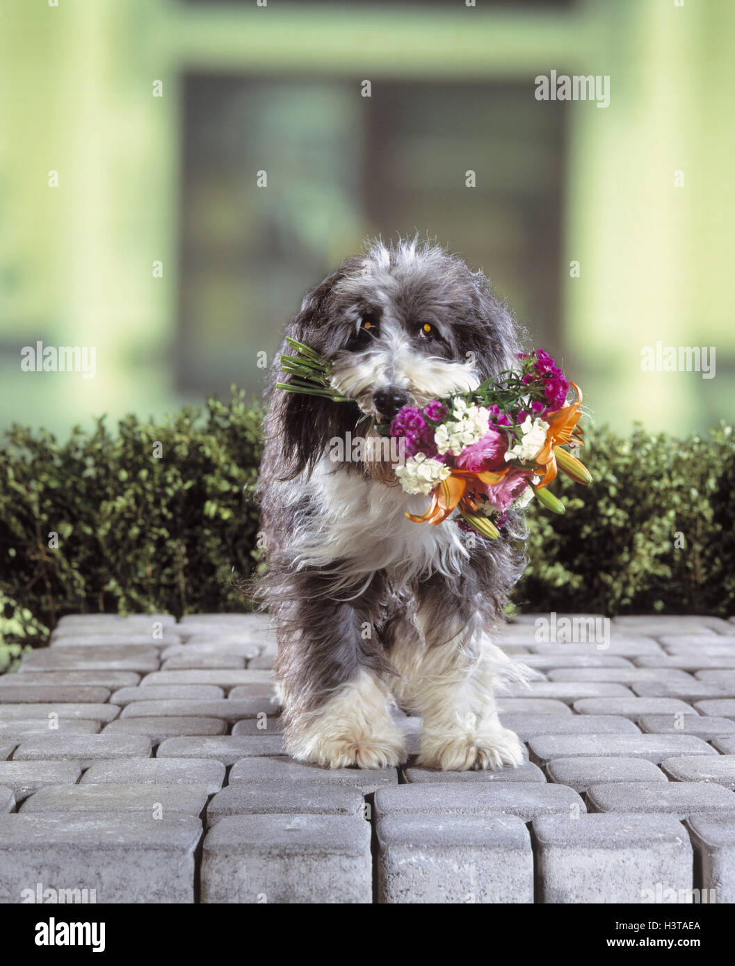 Dog Bouquet Not Freely For Calendar Mkrb Animals Pets Hybrid